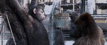 WarForPlanetOfApes09